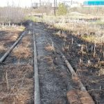 Методы рекультивации нефтезагрязненных почв