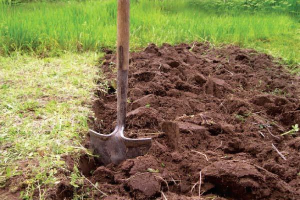 Экспертиза по рекультивации земель