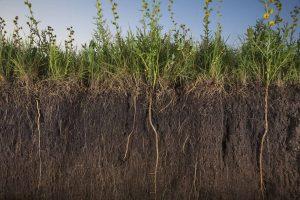 Экспертиза рекультивации нарушенных земель