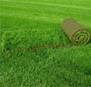 Рекультивации газона