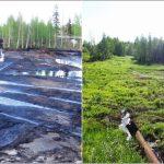 Биологическая рекультивация нефтезагрязненных почв: основное