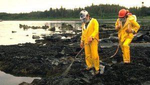 Рекультивация почв, загрязненных нефтепродуктами: как она проводится