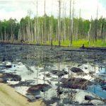 Экологическая экспертиза почв