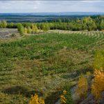 Агрохимический анализ почвы закрытого грунта: основные моменты