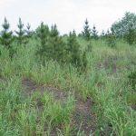 Рекультивация земель при строительстве линейных объектов