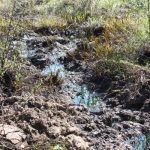 Рекультивация загрязненных почв: коротко и по существу