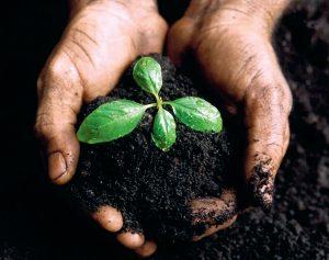 Восстановление почвы