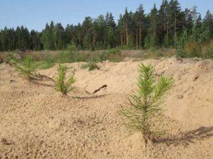 Восстановление плодородия земли, восстановление земли