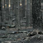 Восстановление почвы после пожаров