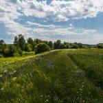 Экологическая экспертиза и рекультивация свалки