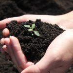 Восстановление земли после рапса
