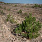 Восстановление нарушенных горными работами земель
