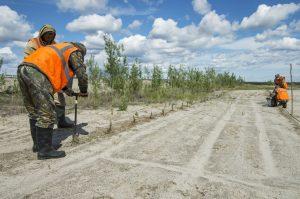 Агробиологические методы рекультивации нарушенных земель: контроль