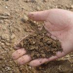 Рекультивация засоленных почв