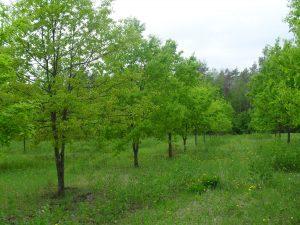 Искусственное восстановление нарушенных земель