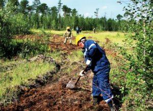 Биологическая рекультивация почв: основная информация