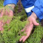 Восстановление продуктивности земли