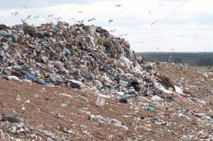 Расчет экологического вреда