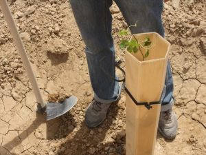 Мероприятия по восстановлению почвы