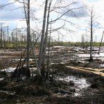 Рекультивация земель, загрязненных нефтью