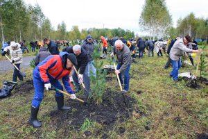 Восстановление земли на участке