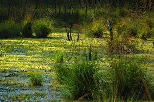 Рекультивация болот: как она происходит