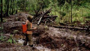 Способы рекультивации нефтезагрязненных земель