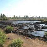 Рекультивация нефтезагрязненных почв