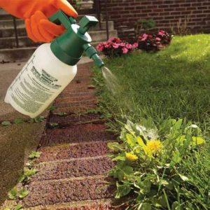 Восстановление земли после гербицидов: основные аспекты