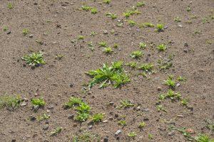 Рекультивация газона: как она должна происходить