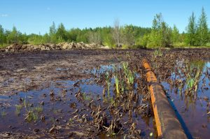 Методы рекультивации нефтезагрязненных земель