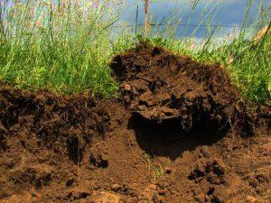 Восстановление плодородного слоя почвы