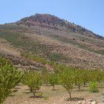 Рекультивация засоленных орошаемых земель