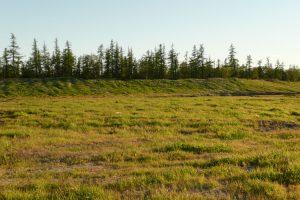 Биологическая рекультивация нарушенных земель: самое главное