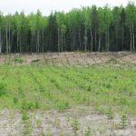 Рекультивация и охрана земель