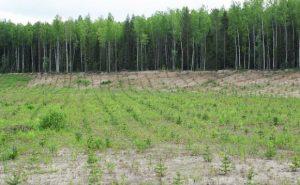 Рекультивация и мелиорация почв