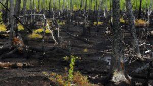 Восстановление земли после пожара: основное