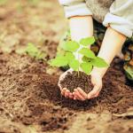 Восстановление плодородного слоя земли