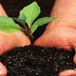 Анализ земли на плодородие