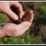 Провести химический анализ почвы