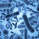 Микробиологический анализ почвы