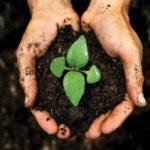 Анализ почвы на загрязнение