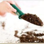 Как узнать какая почва кислая или щелочная