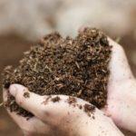 Биотестирование почвы